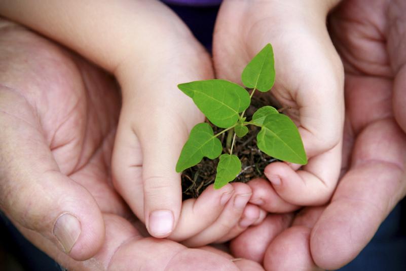 Instituto Life cria certificação para empresas sustentáveis