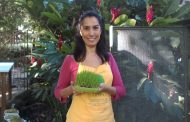 Novidades sobre alimentação viva com Cynthia Brant