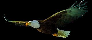 Sergio Machado voava alto e era preciso como uma águia