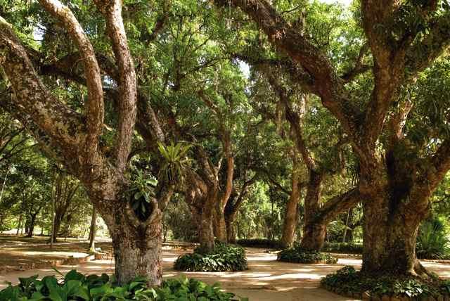 Professores participam de oficina ecológica no Jardim Botânico