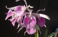 Exposição de orquídeas celebra a chegada da primavera no Jardim Botânico