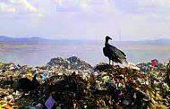 Reflexões à beira de um lixão
