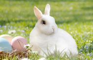 Coelha põe ovo?