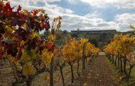 Inclua vinícolas em sua próxima viagem ao Chile
