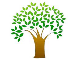 Uma árvore genealógica 100% brasileira: nem que queira, posso trocar o Brasil por Portugal