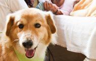 Câmara do Rio aprova PL que autoriza entrada de animais domésticos em hospitais