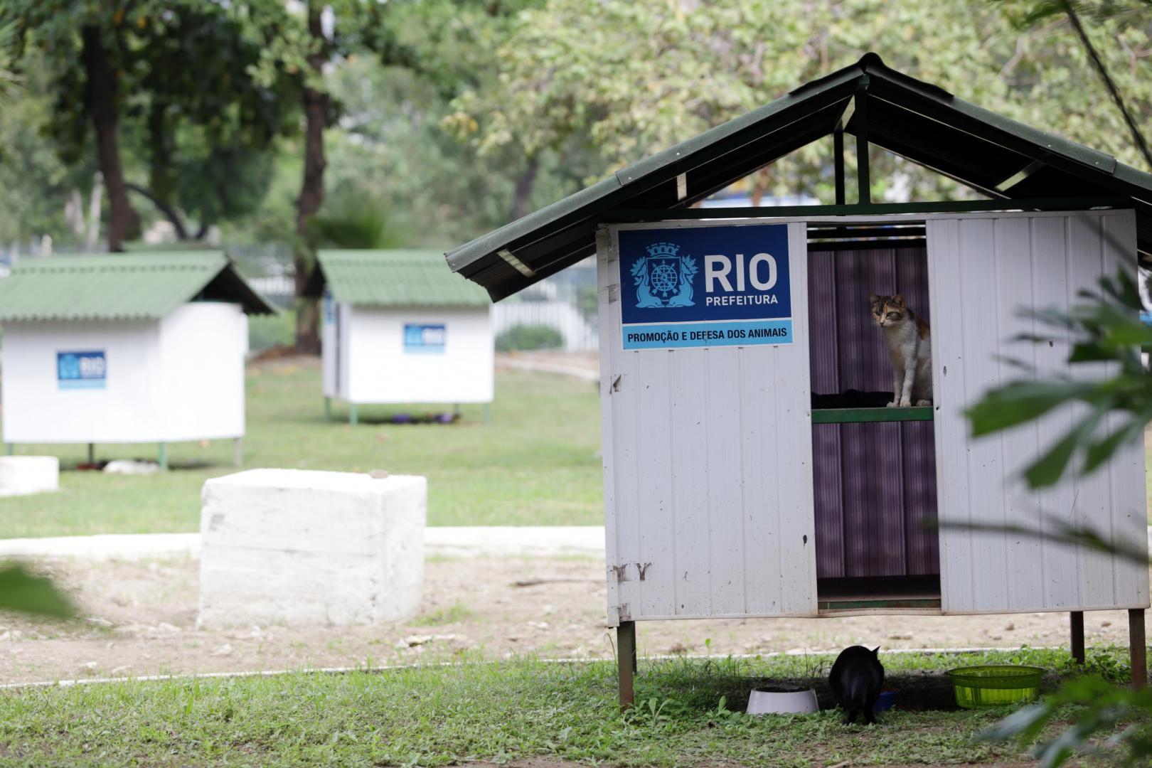 Gatil municipal do centro do Rio é furtado