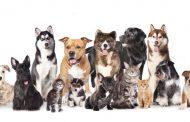 Agora é lei! Animais domésticos podem visitar pacientes internados