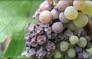 Vinhos Doces