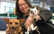 Nélida Piñon passou a Páscoa nas melhores companhias: seus cachorrinhos