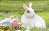 A coelha presa na toca