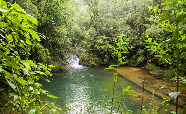 Para 85% dos brasileiros, proteção do meio ambiente deve ser ...