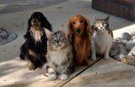 Rio ganha Postos de Saúde para animais