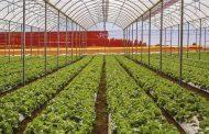 Grupo Madero cumpre missão de oferecer hortifrútis orgânicos em 100% da rede