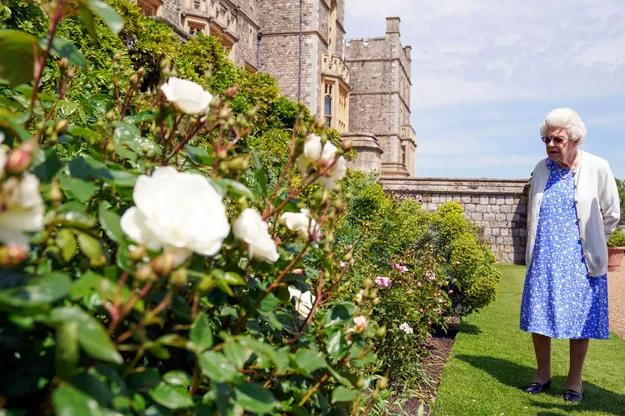 Rainha Elizabeth II recebe nova roseira em homenagemao Príncipe Philip