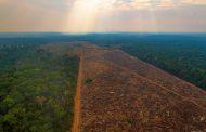 Desmatamento e menos chuva  na Amazônia  ameaçam o agronegócio brasileiro